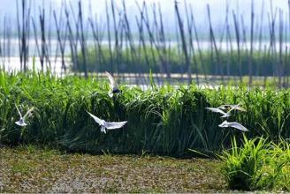向阳湖湿地公园建设项目冒雨开工 加快打造国家级生态名片