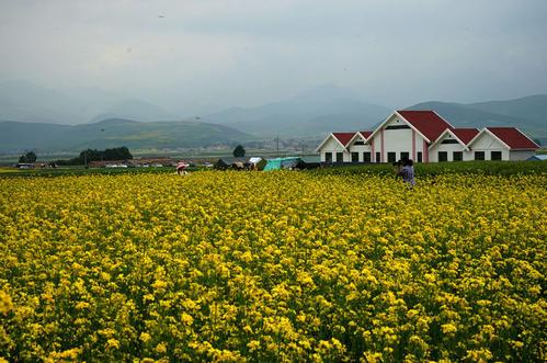 咸安38万亩油菜花盛开正艳 3月22日,春风十里,花海等你