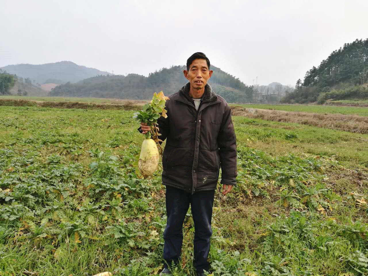咸宁35万斤白萝卜质量太好却要烂在田里……农民不易,快帮帮他们吧!