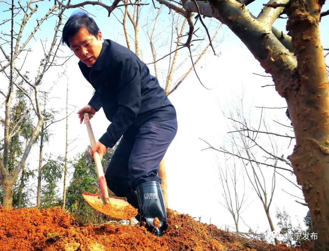 【政务】咸宁市领导集体参加义务植树活动,以实际行动助力绿色崛起!